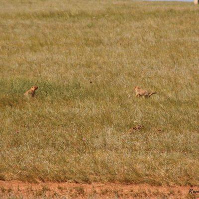 Reise Hunter Mongolei Kleine Nager2