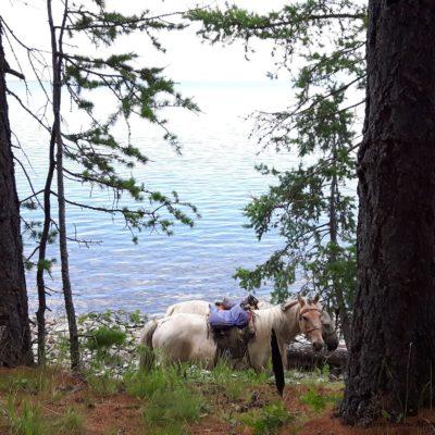 Reise Hunter Mongolei Pferd Judith