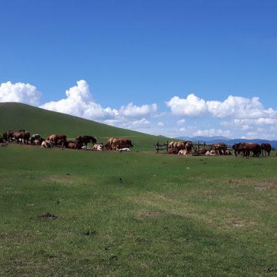 Reise Hunter Mongolei Pferde ruhen sich aus2