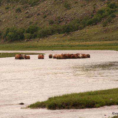 Reise Hunter Mongolei Pferdebadetag
