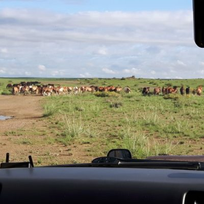 Reise Hunter Mongolei Pferdehorde