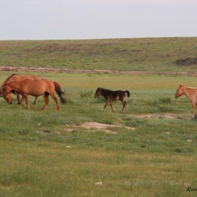 Reise Hunter Mongolei Pferdehorde3