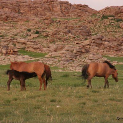 Reise Hunter Mongolei Pferdehorde4