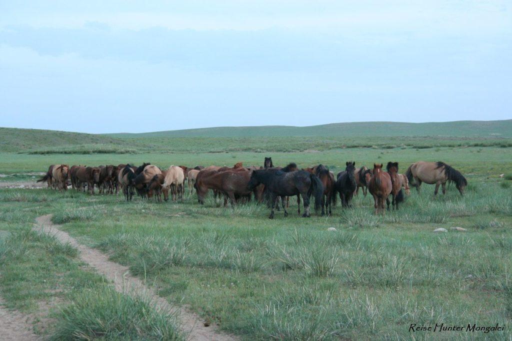 Reise Hunter Mongolei Pferdehorde5