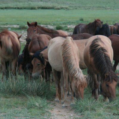 Reise Hunter Mongolei Pferdehorde6