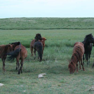 Reise Hunter Mongolei Pferdehorde9