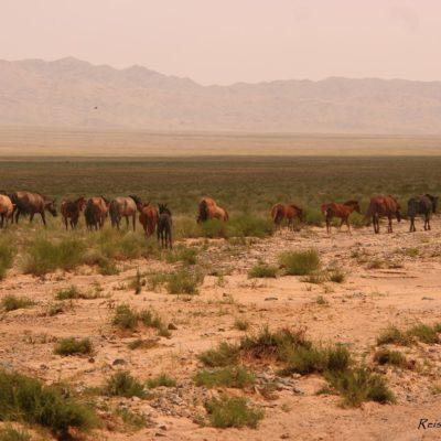 Reise Hunter Mongolei Pferderudel2