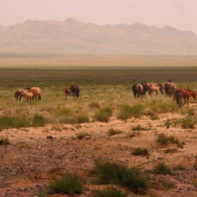 Reise Hunter Mongolei Pferderudel3