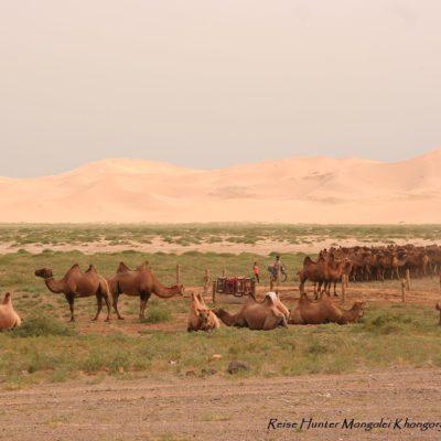 Reise Hunter Mongolei Sanddüne Kamelhorde