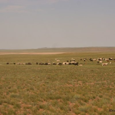 Reise Hunter Mongolei Schafe und Ziegen