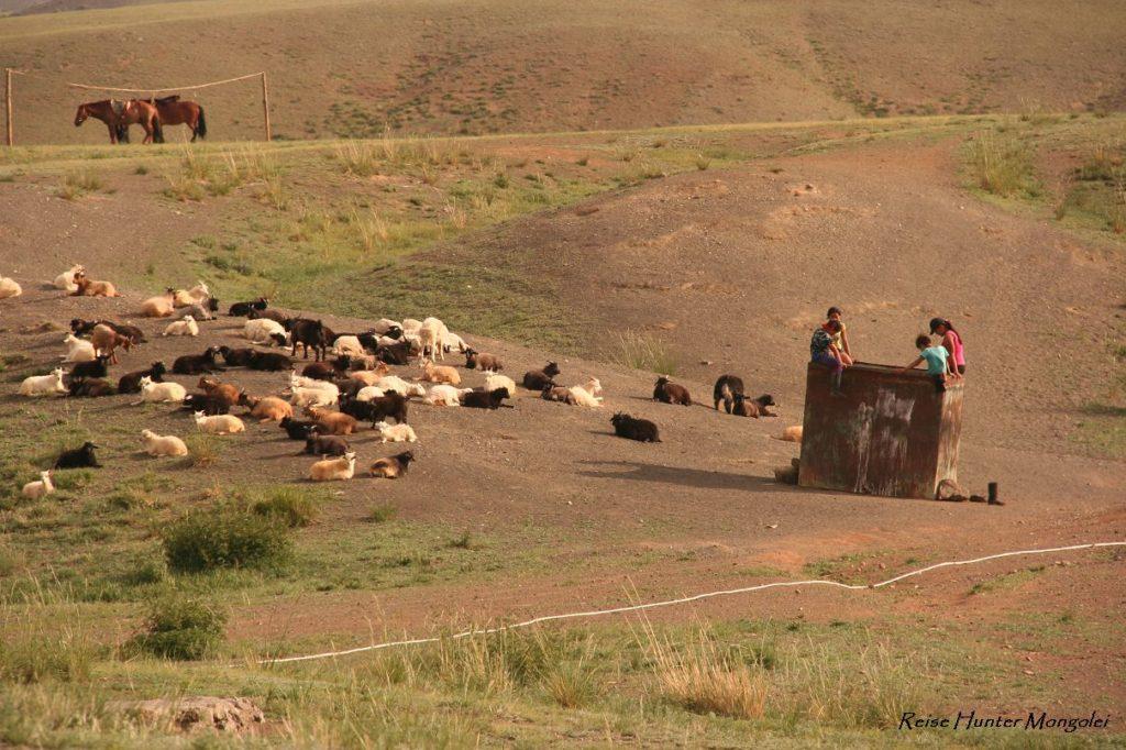 Reise Hunter Mongolei Schafe und Ziegen3