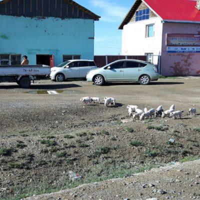 Reise Hunter Mongolei Schweinefamilie