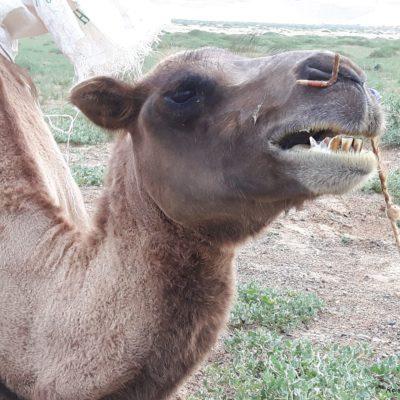 Reise Hunter Mongolei Zahnarztbesuch empfohlen