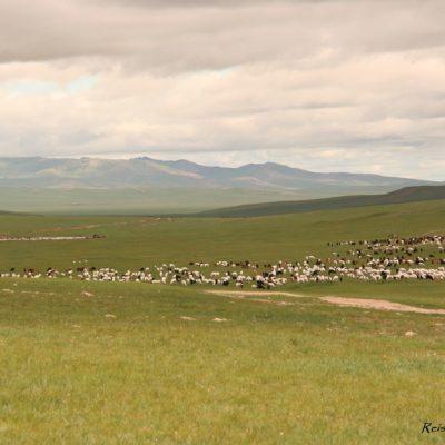 Reise Hunter Mongolei Ziegen und Schafe