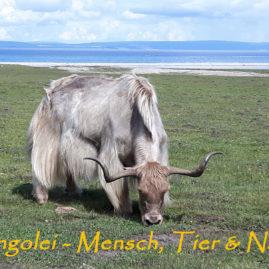 Mongolei – Big 5 und unendliche Weiten