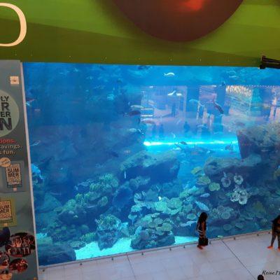 Reise Hunter Dubai Mall Aquarium