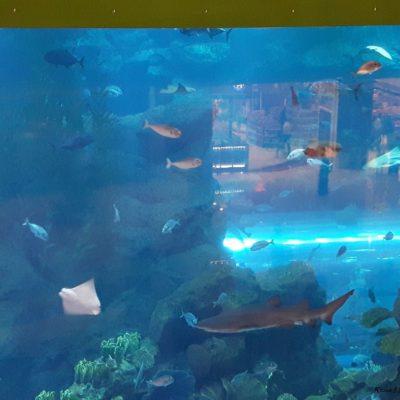Reise Hunter Dubai Mall Aquarium2